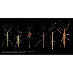 Libro. EL CUADERNO DE ANDRÉS CAICEDO