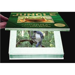 SUZUKI GUITAR SCHOOL VOLUME 2 - (BOOK AND CD)