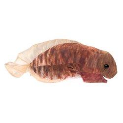 CASA DE PIEDRA Y OTRAS OBRAS- JORGE ACCAME