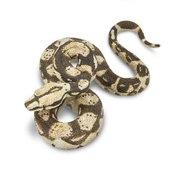 Libro. The Art Of Smallfilms - The Work Of Oliver Postage & Peter Firmin